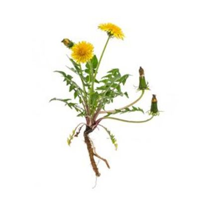 Oferta - zioła